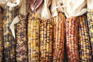 Milhos - Gastronomia Peruana - Duo Gourmet